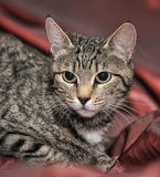 Young striped cat Stock Images