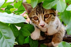 Young striped cat hiding on the tree. Royalty Free Stock Photos
