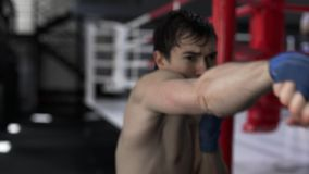 Young strong boxer training in a gym stock footage