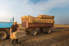 Young and strong farmer throw hay bales in a tractor trailer - b. Ales of wheat at field royalty free stock image