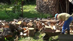 Young strong worker man load chopped wood to rusty barrow. 4K stock video footage