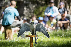 Young Students in Lesson on Falcons at Castle of Vezio_ Lake Com royalty free stock photos