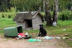 Young stupid dog cane corso playing with garbage container royalty free stock image