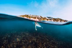 Young surf girl at surfboard underwater in sea stock photography