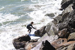 Young surfer with surf board goes out of water  to the rude rock coast on a bay in San Francisco Royalty Free Stock Photography