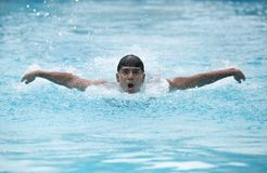A young swimmer performing butterfly stroke Royalty Free Stock Photo