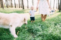 A young, sympathetic mother with a son and a dog actively and cheerfully spend time in nature stock photography