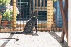 Young tabby cat behind fence in garden. Royalty Free Stock Image
