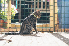 Young tabby cat behind fence in garden. Royalty Free Stock Photography