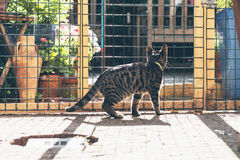 Young tabby cat behind fence in garden. Stock Photos