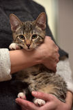 Young tabby cat Stock Photography
