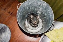 Young tabby cat sitting in empty garbage bin. High angle view. Royalty Free Stock Photography