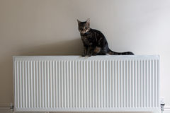 Young tabby cat standing on top of a radiator Royalty Free Stock Image