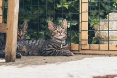 Young tabby cats lying in garden in front of fence. Stock Photo