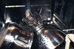 Young tabby kitten exploring inside a dishwasher Royalty Free Stock Photo