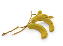 Young Tamarind Stock Images