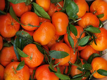 Young tangerines. A little composition of tangerines behind  frankfurt center in germany Royalty Free Stock Images