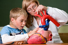 Young teacher and schoolboy with heart. At biology class Royalty Free Stock Image