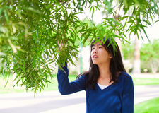 Young teen girl outdoors, reaching up to touch leaves on tree Royalty Free Stock Image