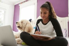Young teen girl studying on her bed beside pet dog royalty free stock photography