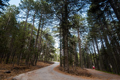Young teenage walkin in a  forest road Royalty Free Stock Photo