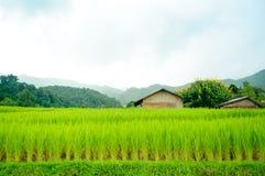 Young terrace rice plantation in a Karen village, Thailand Stock Photo