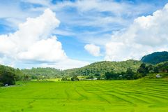 Young terrace rice plantation in a Karen village, Thailand Stock Image