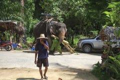 Young Thai elephant rider feeding his elephant with bananas Royalty Free Stock Photography