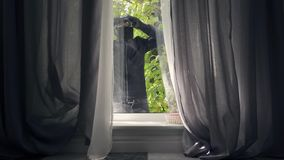 Young thief in black clothes and balaclava looking in the window preparing to break into the house. Concept of offense. Young thief in black clothes, gloves and stock video footage