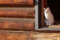 Young three-colored cat in a doorway stock images