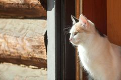 Young three-colored cat in a doorway royalty free stock image