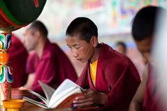 Young Tibetan Buddhist monk praying in Thiksey gompa (Buddhist m Stock Images