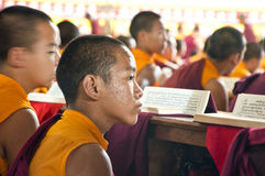 Young Tibetan monks reading religious scriptures Royalty Free Stock Images