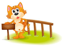 A young tiger near the empty wooden signboard Stock Photography