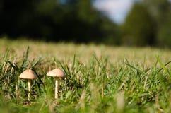 Young tiny mushrooms Stock Photos