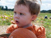Free Young Toddler Girl Outside Holding A Pumpkin With Pumpkin Fields In The Background Royalty Free Stock Image - 97371036