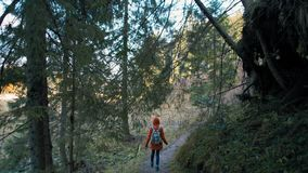 Young Tourist with Backpack is Walking on Beautiful Path in Forest in Autumn. Young Tourist with Backpack is Walking on Beautiful Path in Forest in Sunny Autumn stock footage