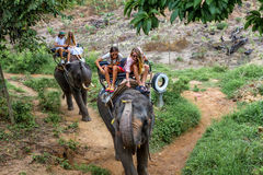 Young tourists are riding on elephants through the jungle royalty free stock photo