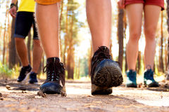 Young tourists in the woods Stock Photography
