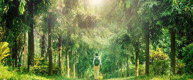 Young traveler walking into deep forest Stock Photo
