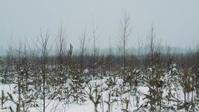 Young traveler walking on snow covered prairie shrubbery on winter day. Young traveler in warm clothes and backpack walking on snow covered prairie shrubbery on stock video footage