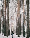 Young traveler woman  in winter forest Royalty Free Stock Image