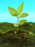 Young tree Stock Images