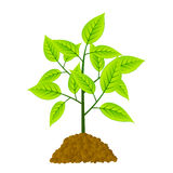Young tree Stock Image