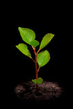 Young tree stock photography