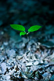 Young tree Royalty Free Stock Photo