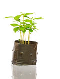Young tree in bag Royalty Free Stock Image