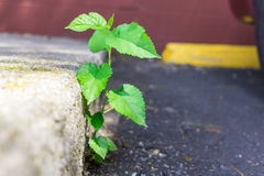 Young tree growing from asphalt black top royalty free stock photos