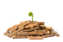 Young tree growing out of wood pellets Stock Photos