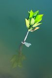 Young tree growing in water. Solution for global worming problem Royalty Free Stock Photos